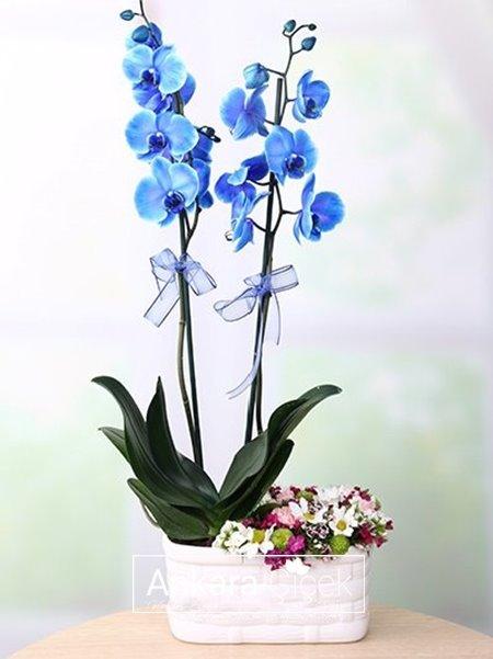 Mavi Orkide  Kır Çiçeği Arajmanı