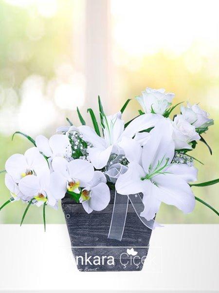Vazoda Üç Beyaz Çiçek