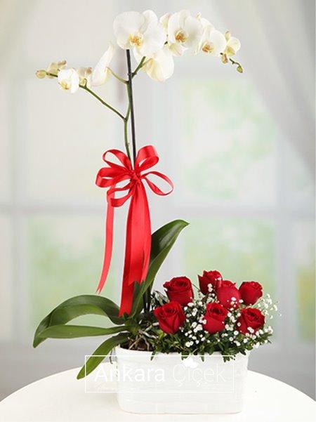 Tek Dallı Orkide  Kırmızı Güller