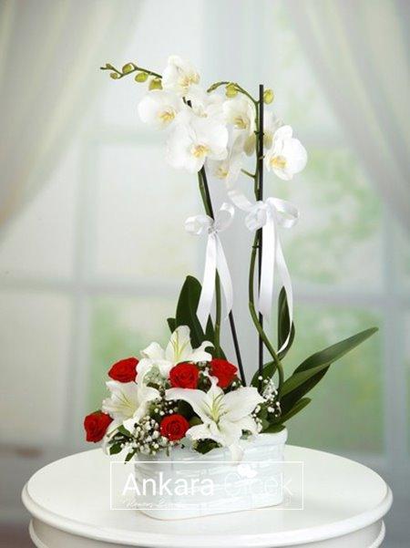 2 Dal Beyaz Orkide Aranjmanı