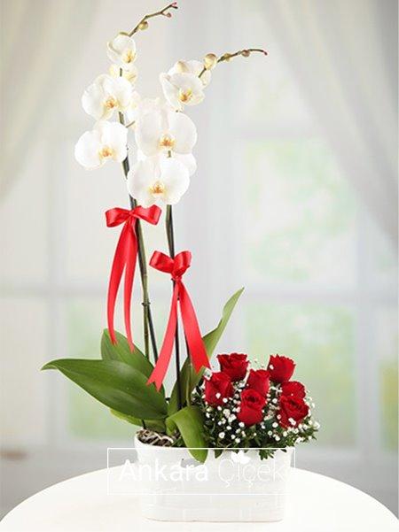2 Dal Orkide ve Güller