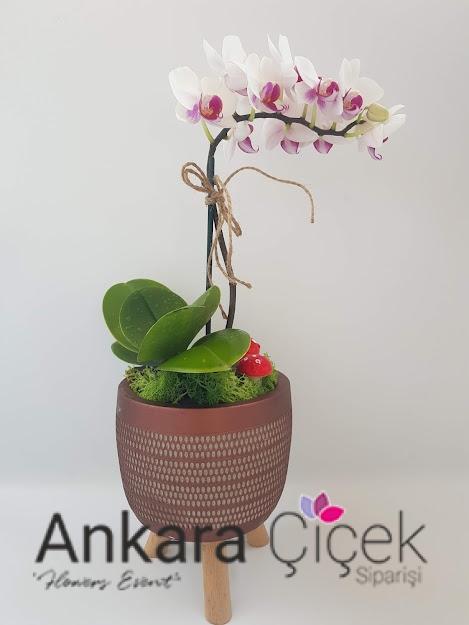 Ankara Orkide Çiçeği