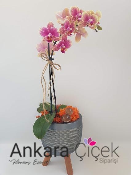 Ankara Orkide