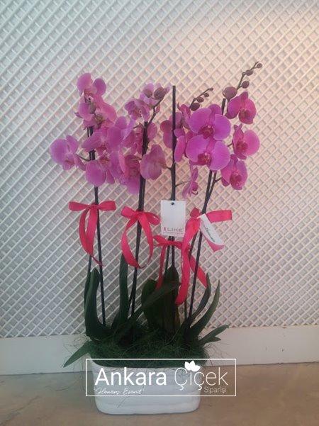 Vazoda 4 Dal Fuşya Mor Orkide