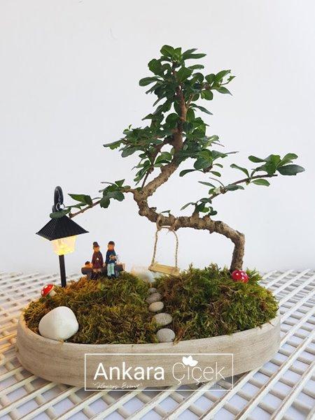 Zelkova Bonsai Minyatür Ağaç
