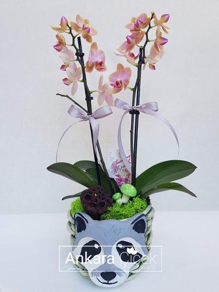 Şirin Sevimli  Orkide