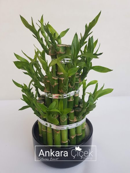 Şans  Piaramit  Bambu