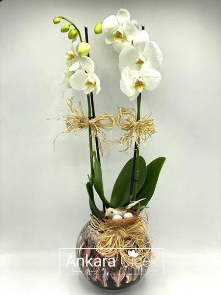Kar Beyaz Orkide