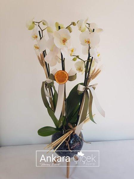 3 Dal Beyaz Orkide
