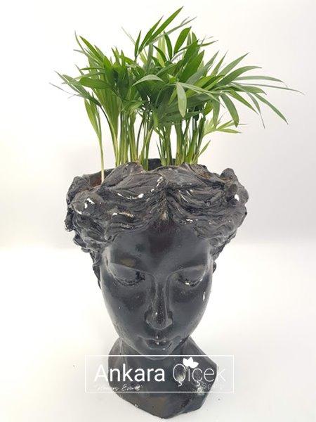 Helen  Vazoda Palmiye Çiçeği