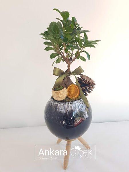 Vazoda Bonsai Bitkisi