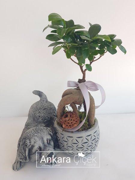 Dog Köpek Vazo Bonsai