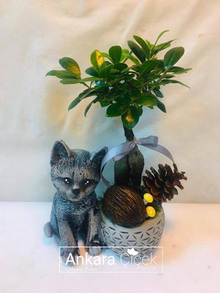 Sevimli Kedi Bonsai