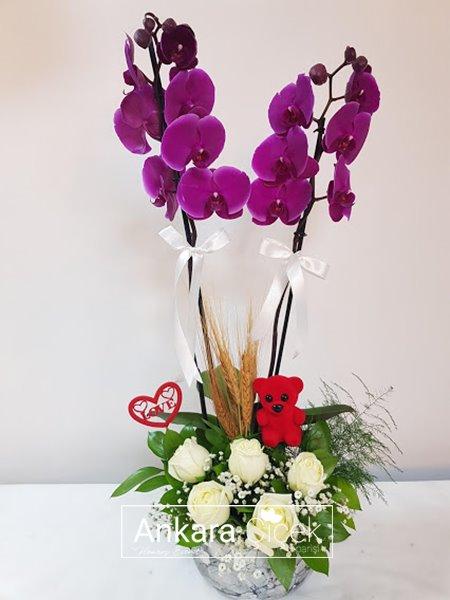 Renkli Orkide Beyaz Gül