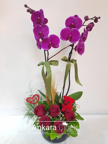 Ankara  Orkide Çiçek Siparişi