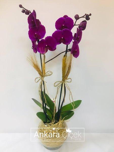 Sevgiliye Özel Orkide