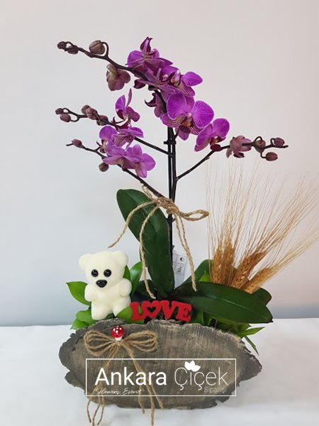 Sevgiliye Çiçek Midi Orkide