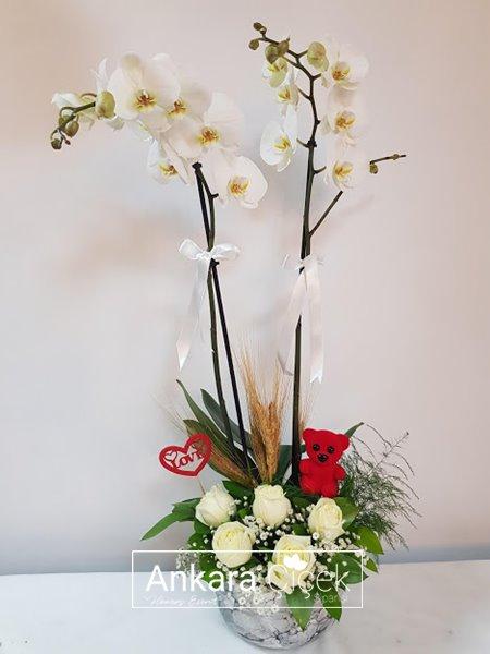 Beyaz Gül Beyaz Orkide