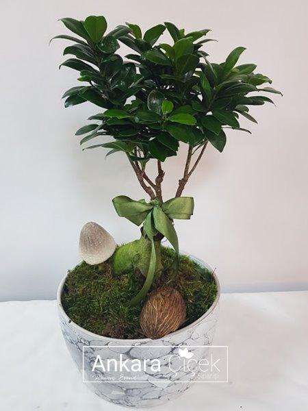 Ginsec Bonsai Saksı Çiçek