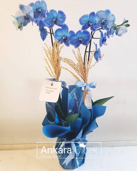 İki Dallı Mavi Orkide