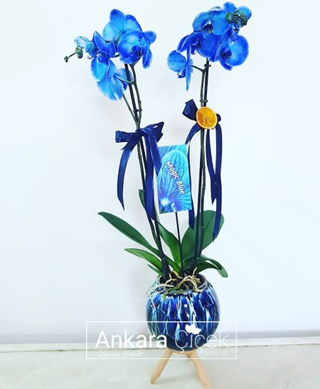 Deniz Mavi Orkide