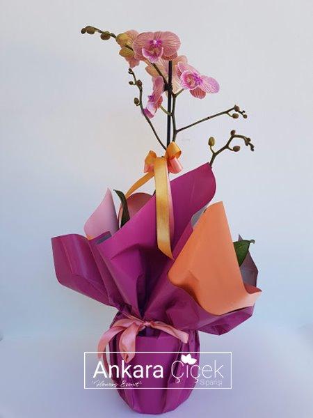 Özel Seri Tekli Orkide
