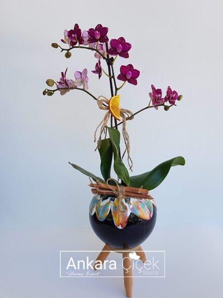Midi Tekli Mor Orkide