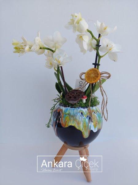 Midi İkili Beyaz Orkide
