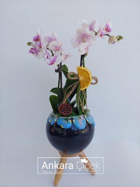 Midi Renkli Orkide