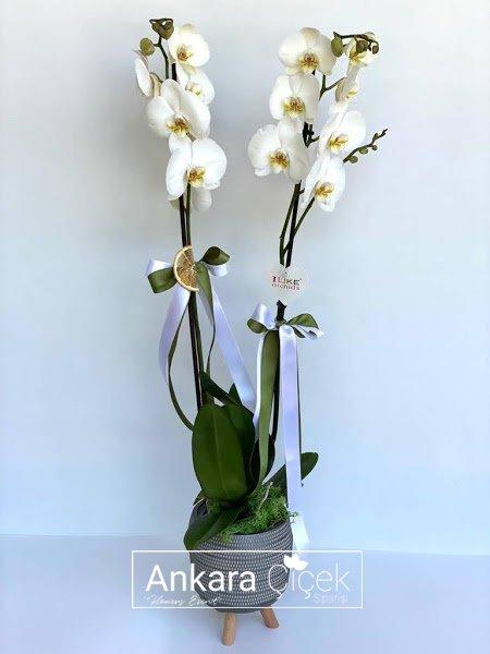 Dekoratif Vazoda Beyaz Orkide