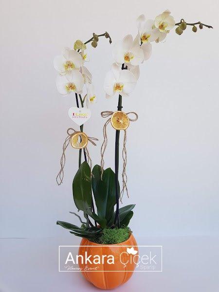 Kabak Vazoda Beyaz Orkide
