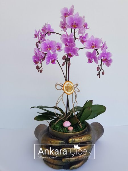 Ellerimde Çiçekler Pembe Orkide