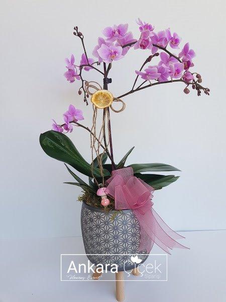 Pempe Midi Orkide