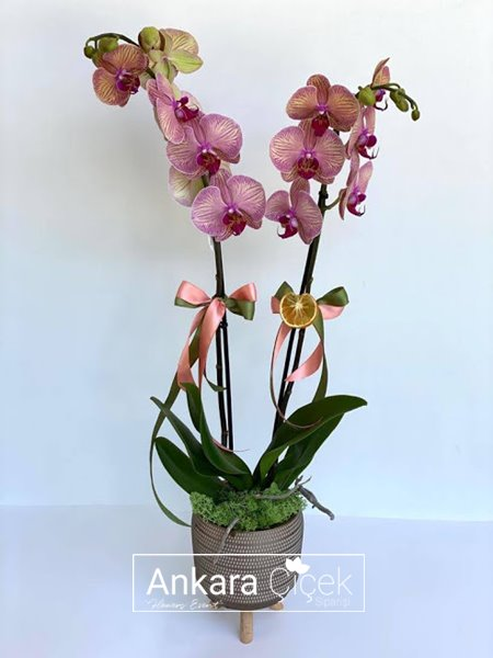 Özel Vazoda Renkli Orkide