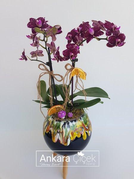 Özel Midi Mor Orkide
