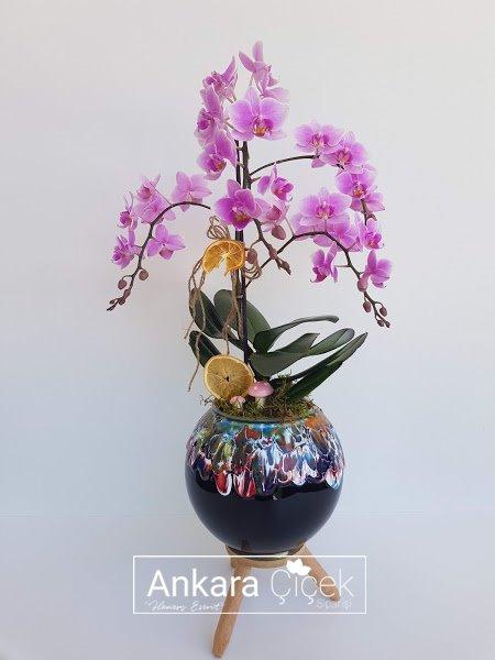 Özel Vazoda Pembe Midi Orkide