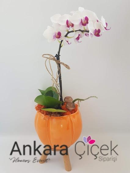 Yeni İş Çiçeği Orkide